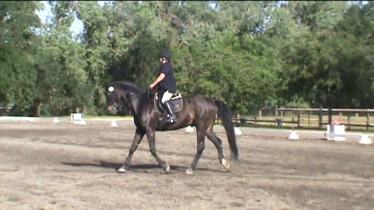 Legend's first dressage show.  He was a good boy.  I was a sucky rider.
